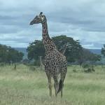 写真2タンザニアイメージ